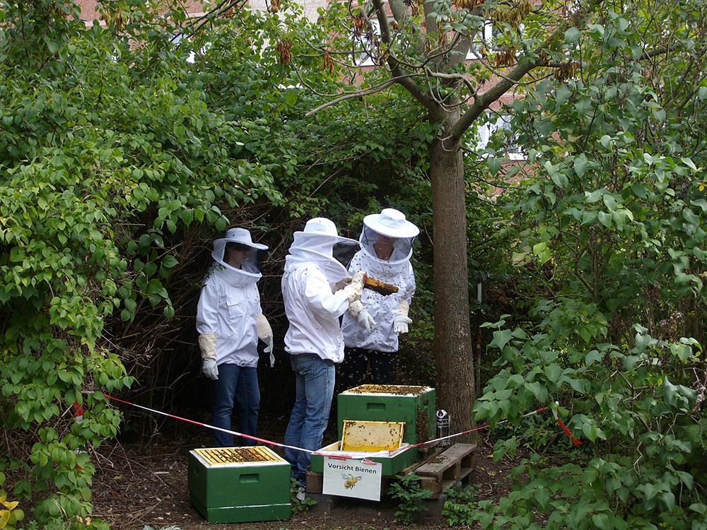 Arbeit-am-Bienenvolk